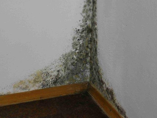 Как избавиться от белой плесени на стенах в квартире
