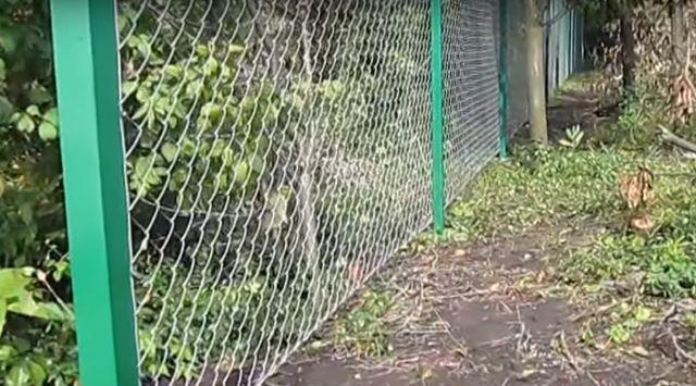 забор-из-сетки-рабицы